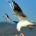 放飞的小鸟