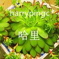 harrypingc